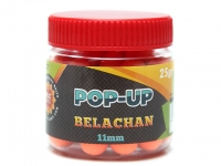 Pop-up WLC Belachan