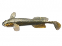 Shad Quantum Goby Puddle of Mud