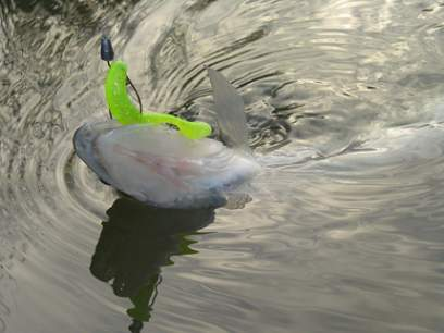 Shad Bass Assassin Turbo Shad 10cm Purple Canary