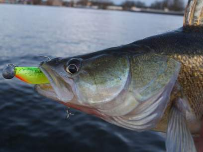 Shad Fox Rage Zander Pro 7.5cm Young Perch