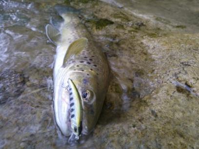 Vobler DUO Ryuki 60 6cm 6.5g ADA4071 Hokkaido S